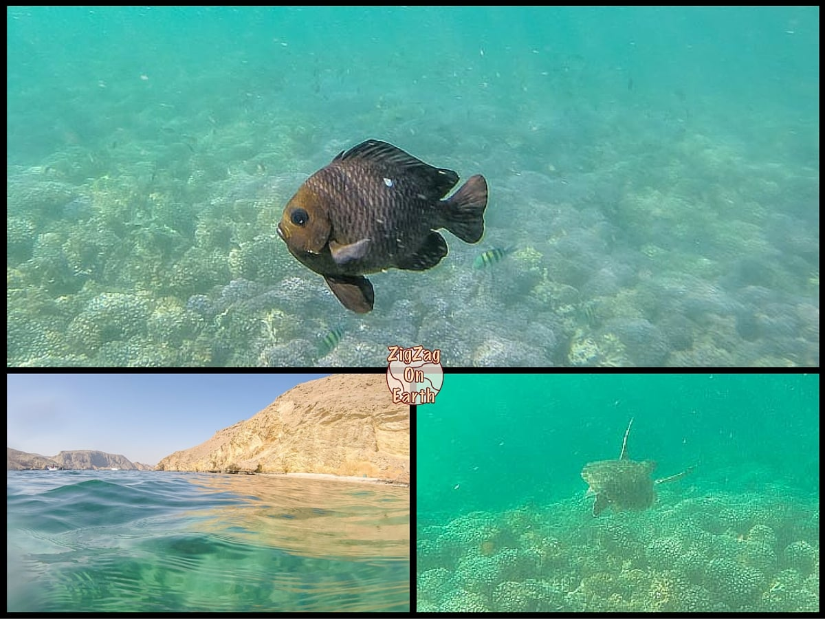 Best things to do in Oman - diving or snorkeling